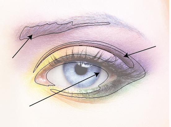 Бровь, веко, складка вокруг глаза